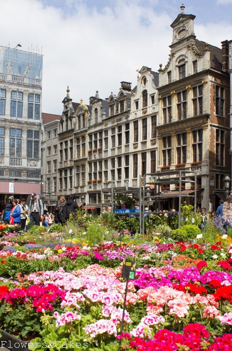 Bruksela (8)
